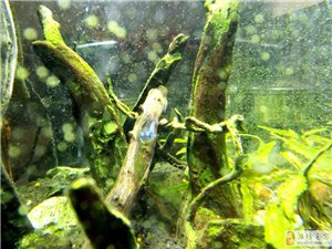 玻璃钢里养鱼鱼
