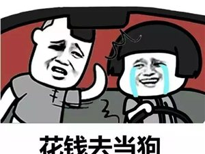 段子手我只服驾校教练,笑抽了哈哈哈哈哈哈......
