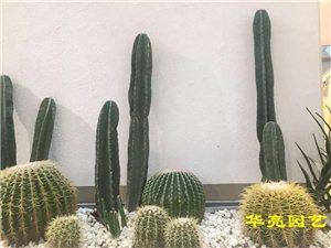 过年了,来点不一样的植物组合~~广汉市华亮园艺祝大家新年快乐!