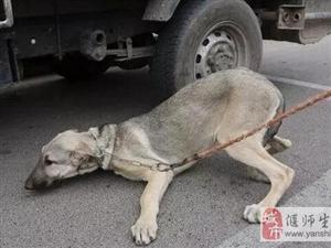狗狗赖在地上死活不走,还以为是在耍赖,知道原因后,有点心酸