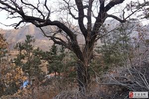 发现一个美丽的小山村
