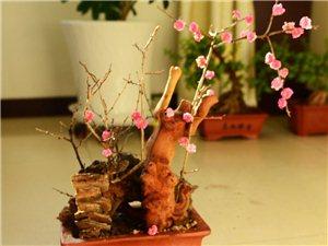 《梅花迎春》雏鸡鸣春