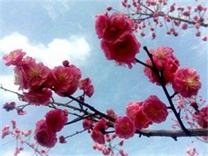 【原创诗歌】春天的脚步