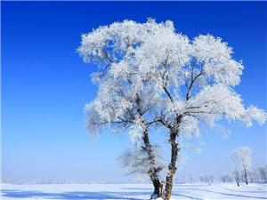 雪景是一��既清�,又浪漫的一�N自然景象,不同的雪。依��雪的形�B,雪景可