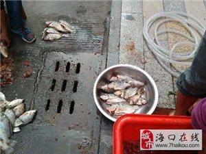发今天的鱼货