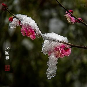沁园春.雪