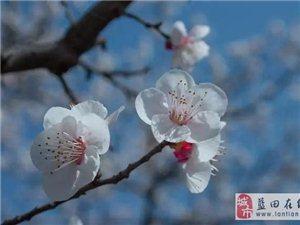 年年杏花开相似 岁岁往来人不同