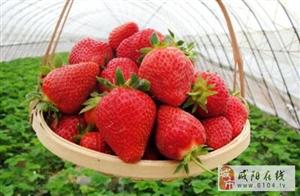 【3 月1日话题】春天到了,草莓熟了・・・・・・