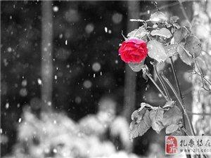 �歌:落雪如�