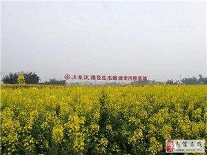 南溪油菜花节即将开幕,美景提前大曝光!