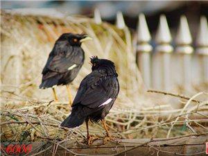 春日拍鸟得小片