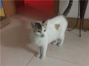 家有一只猫猫,因特殊原因没法养了,寻一位有爱心的人事