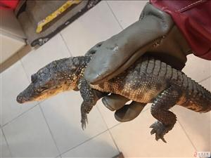有没有想养e鱼e龟小宠物的