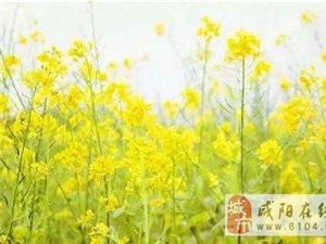 2018咸阳最全赏花攻略来了!花海之约不要错过!