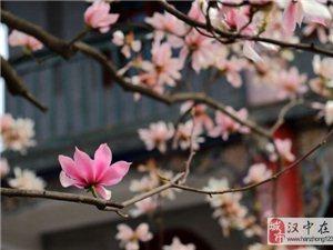古汉台:忽如一夜春风来 争奇斗艳旱莲开