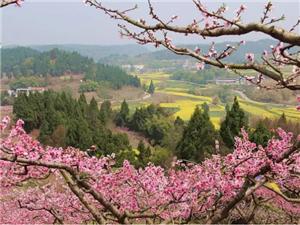 四川的低调小县,被12大花海簇拥,即将承包你接下来2个月的周末!