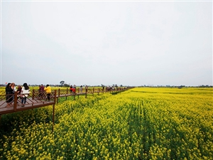 第五届广汉油菜花季将于3月9日正式开幕,和西高有个约定不见不散!