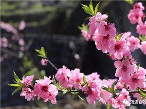 徒步看桃花了