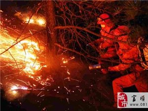 今天凌晨富顺这里的山火终于扑灭,肇事者被刑事拘留!