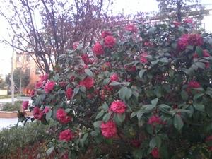 【龙潭】我们学校的花开了,谁陪我一起看?