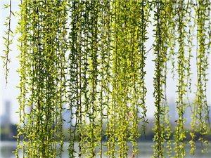 又是一年春天到,春风吹绿江南岸!