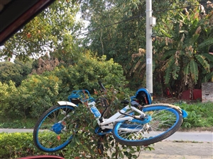 不文明行为随手拍,这样糟蹋共享单车真的不应该啊!!