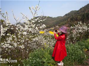 仁寿城郊这片绝美山林,李子花似霜如雪漫山野,踏春赏花正当时