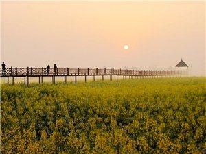 西高日出――到美丽的油菜花田去,让你记住这一年的春天(图片)