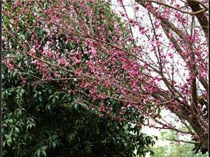 【苍溪】春日暖阳滨江美【图】