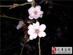 春天的气息!各种花花儿争相开放