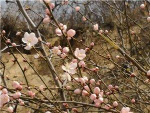 蓝田汤峪河的早春……