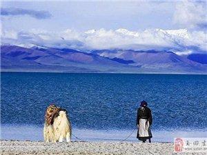 澳门大小点网址师徒徒步西藏第五十六天!肉球自创哈哈步!
