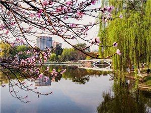 川西明珠金雁湖春光无限,柳丝依依桃花映红,徜徉在林间花丛其乐融融!
