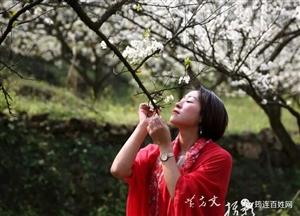很多筠连人去春风村赏花,结果居然还看到了.....