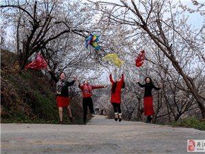 丹江口在线摄影俱乐部潘家岩樱桃花采风活动