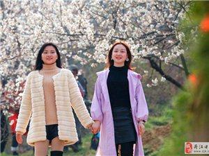 丹江口有个樱桃沟