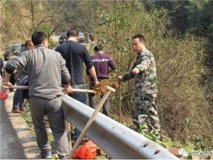 """五强溪镇公务官员与众民忙碌在""""植树节"""""""