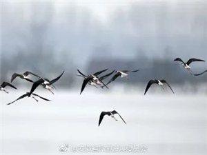 """霍邱""""千岛湖""""有多美!你见过了吗?"""