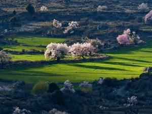 相约藏地最美春天,结伴川藏南线