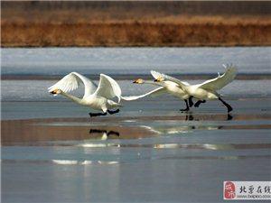 七律・燕湖春梦