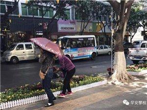 """光天化日!仁和新街上出�F大批""""采花�\""""!"""