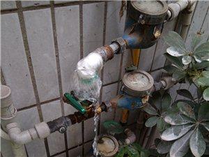 这样流走的水,是浪费吗?政务中心后门去年就流,反应无人理。
