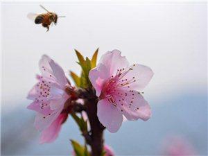 又到桃花盛开时,走出家门,赏花踏青,惬意地感受着春的气息吧