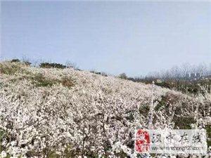 南郑竟然还有这么美的地方,还不赶紧去看看……