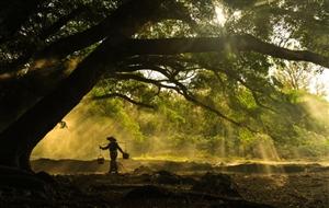 澳门威尼斯人游戏网站原创作品《院子里,那棵老枣树》作者:郭义方
