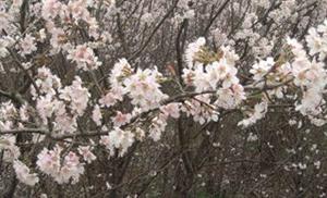 又是一年春到来