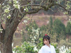 美女松林赏花季~~~白锦无纹香烂漫,玉树琼苞堆雪(图片)