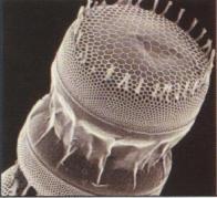 【专家老石谈装修】硅藻泥为什么备受人们宠爱?就让小编来告诉你