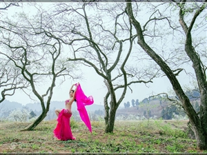 梨花朵朵美丽人间,婀娜多姿舞动春天(组图)