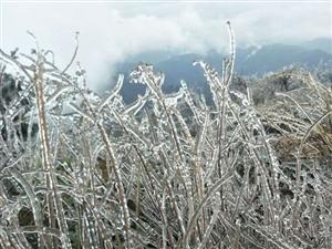 今天镇巴大多山上都鬼斧神工成冰雕了